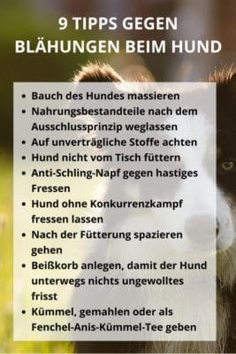 9 Tipps gegen Blähungen beim Hund