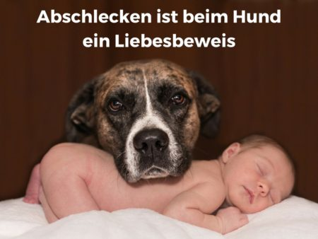 Hunde lecken Säuglinge ab, als Liebesbeweis