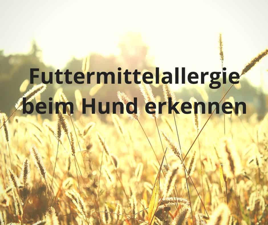 Futtermittelallergie beim Hund erkennen