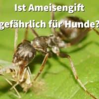 Ist Ameisengift gefährlich für Hunde?