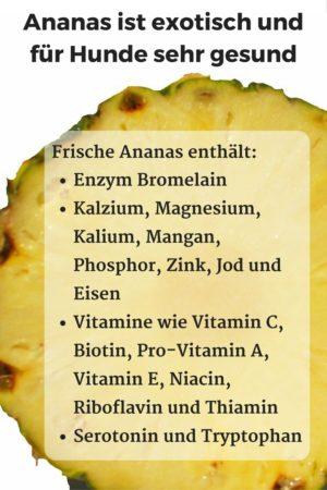 Ananas enthält das Enzym Bromelain sowie Vitamine und Spurenelemente, die für Hunde gesund sind
