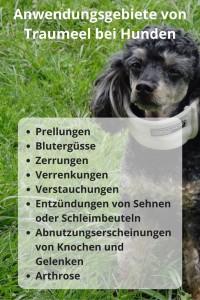 Traumeel Anwendungsgebiete bei Hunden