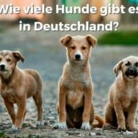 Wie viele Hunde gibt es in Deutschland?