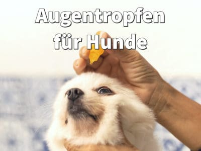 Augentropfen für Hunde