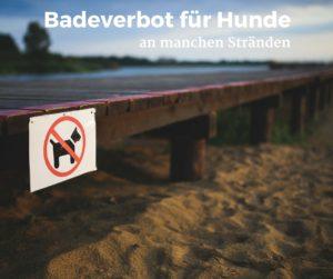 Strandverbot für Hunde