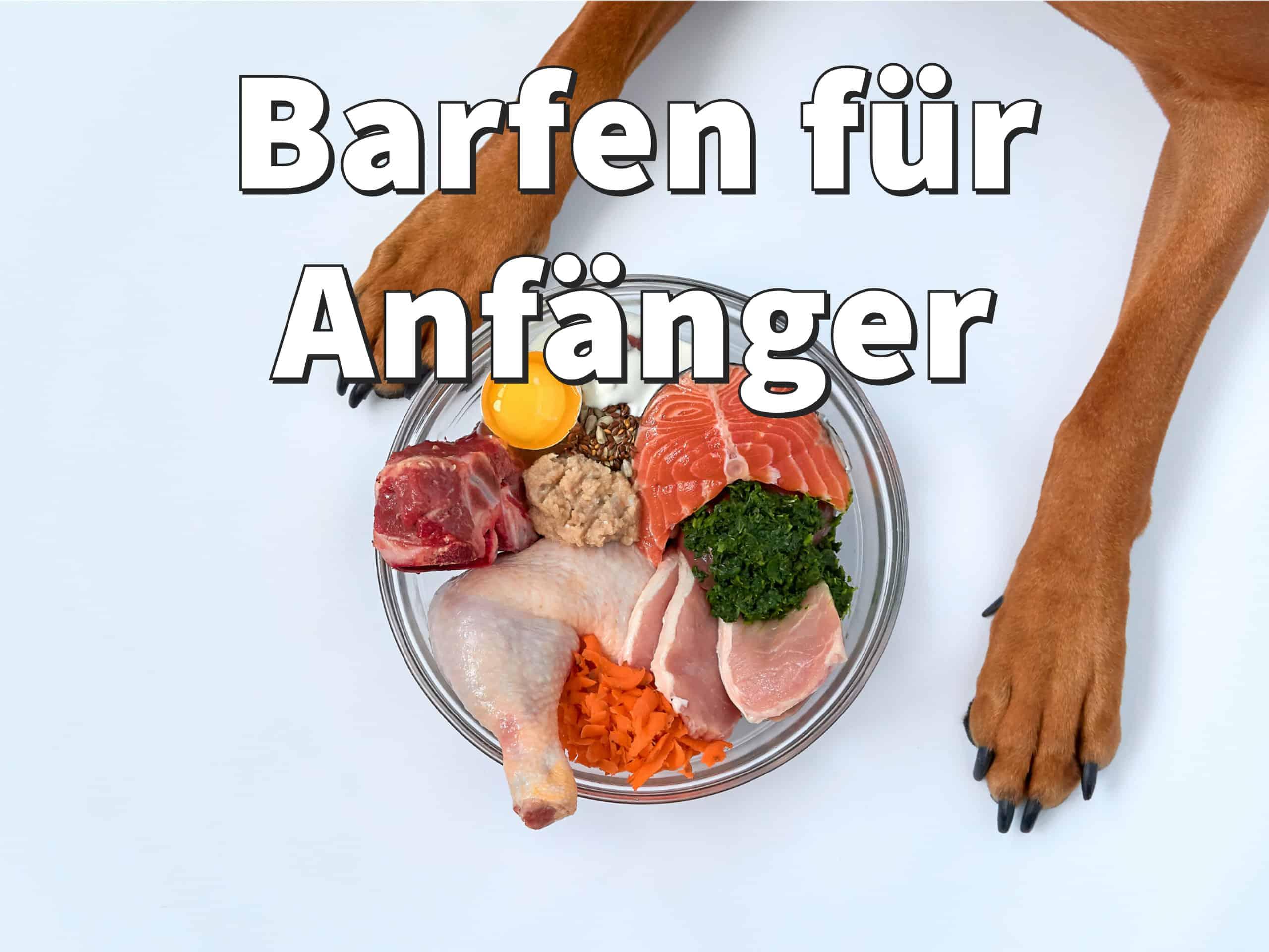 Barf Diät für Hunde