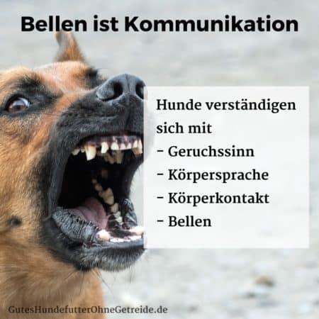 Hunde verständigen sich mit Bellen