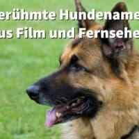 Berühmte Hundenamen aus Filmen, Fernsehen und Kino