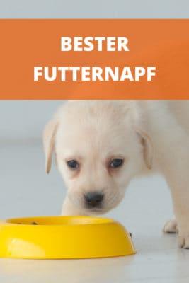 Bester Futternapf für Hunde: Keramik, Edelstahl, Melamin