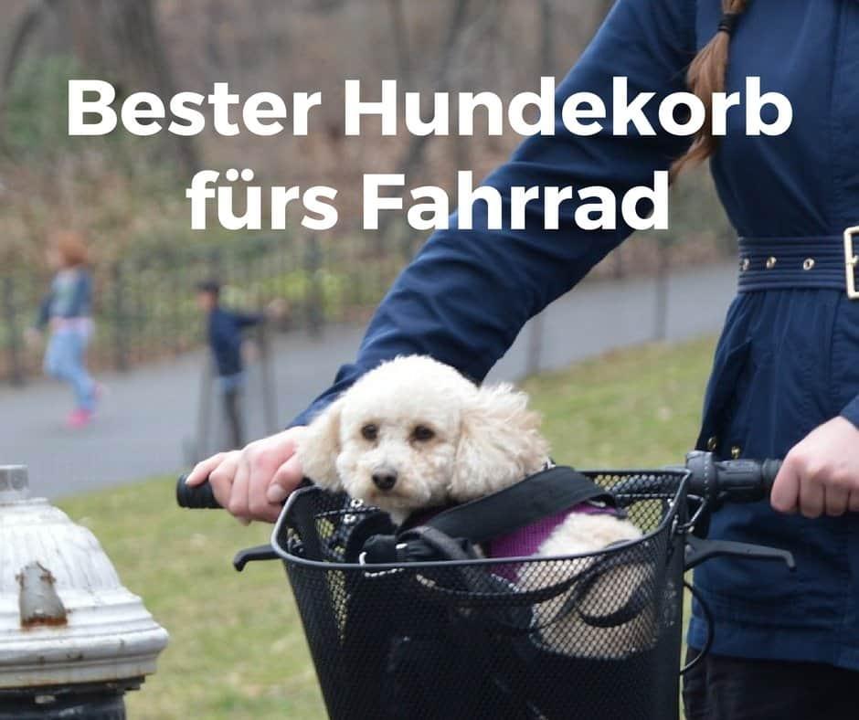 Bester Hundekorb fürs Fahrrad, mit Empfehlungen und Praxistest