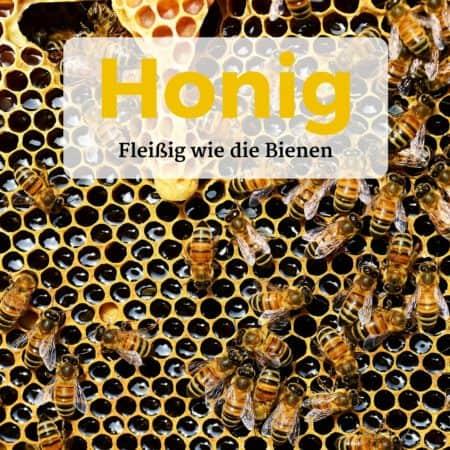 Bienen legen Waben für den Honig an