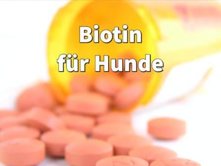 Biotin für Hunde - So beugen Sie Biotinmangel beim Hund vor