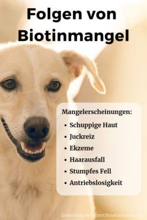 Folgen von Biotinmangel beim Hund