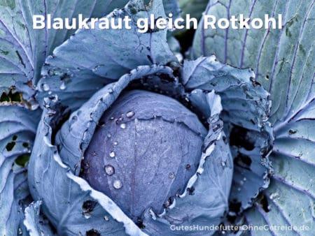 Rotkohl wird auch Blaukraut genannt