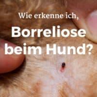 Wie erkenne ich Anzeichen für Borreliose beim Hund?
