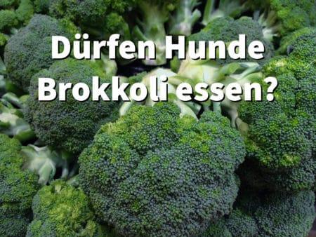 Brokkoli für Hunde