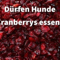 Dürfen Hunde Cranberrys essen?