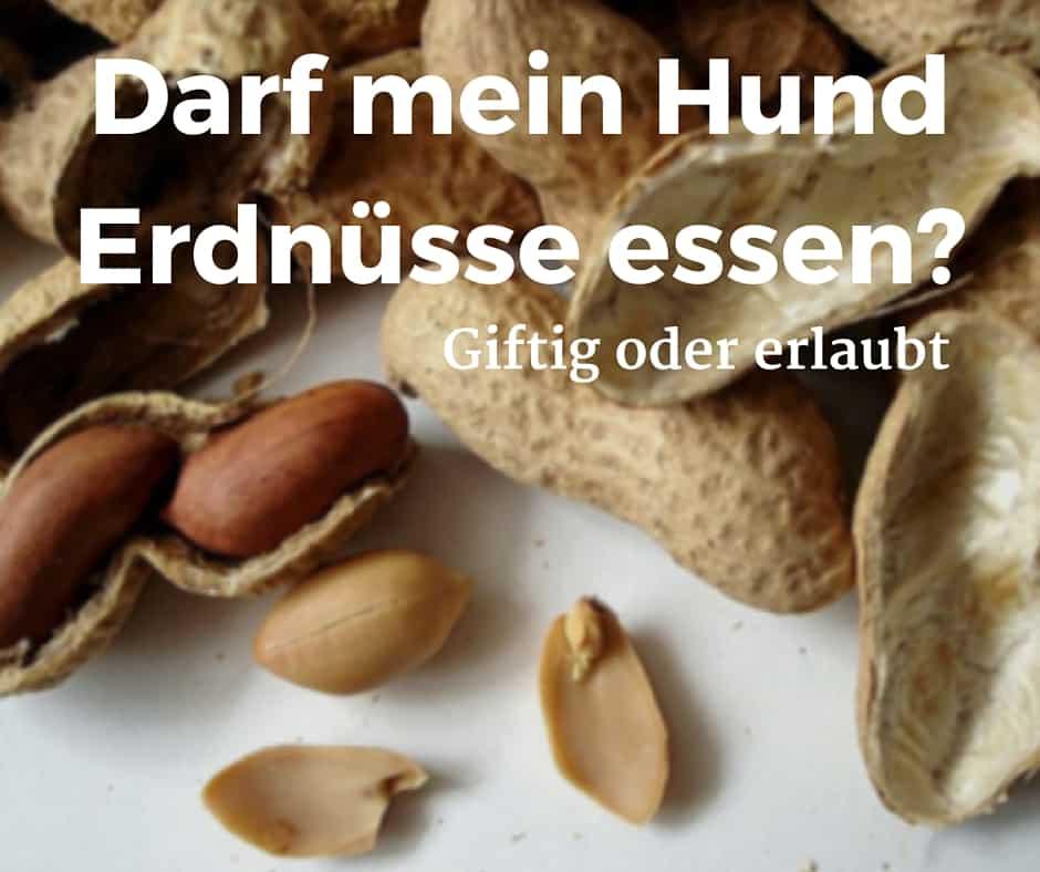 Darf mein Hund Erdnüsse essen? Giftig oder erlaubt
