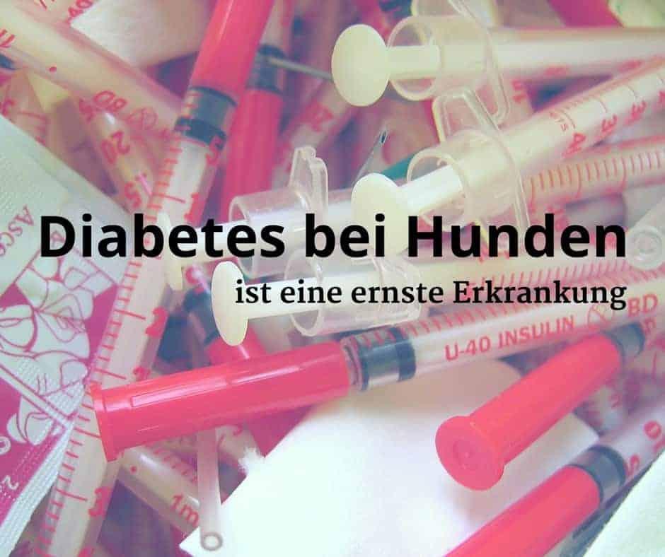 Diabetes bei Hunden ist eine ernste Erkrankung