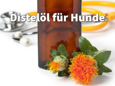 Distelöl für Hunde: Dosierung bei Juckreiz, Wirkung auf Fell, Haut, Haare