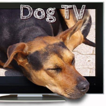 Dog TV als Hundefernsehen