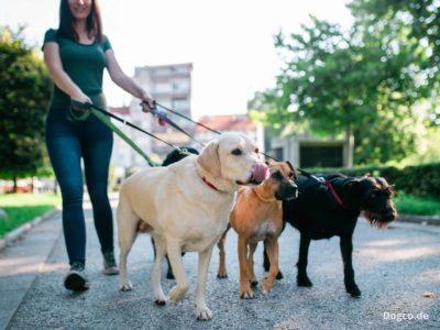 Probeschnuppern beim Dog-Walking in der Hundepension