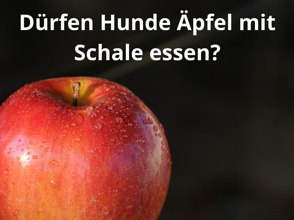 Dürfen Hunde Äpfel mit Schale essen