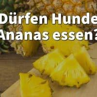 Dürfen Hunde Ananas essen?