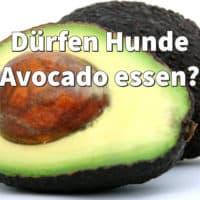 Dürfen Hunde Avocado essen?