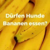 Dürfen Hunde Bananen essen?