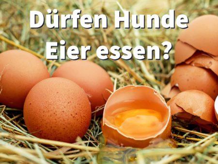 Dürfen Hunde Eier essen? Roh, gekocht oder gleich mit Schale