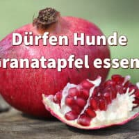 Dürfen Hunde Granatapfel essen?