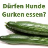 Dürfen Hunde Gurken essen, wie grüne Salatgurken und saure Gurken?