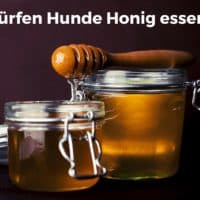 Dürfen Hunde Honig essen?
