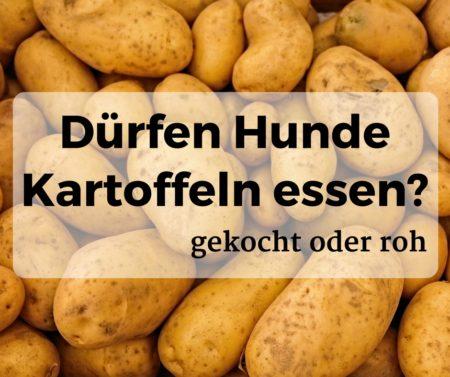 Dürfen Hunde Kartoffeln essen, gekocht oder roh?