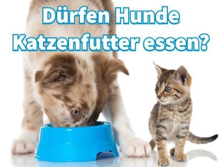 Dürfen Hunde Katzenfutter essen?