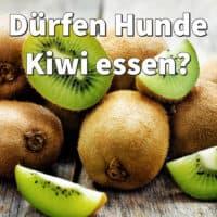 Dürfen Hunde Kiwi essen?