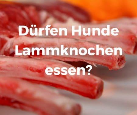 Dürfen Hunde Lammknochen essen?