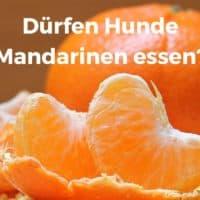 Dürfen Hunde Mandarinen essen?