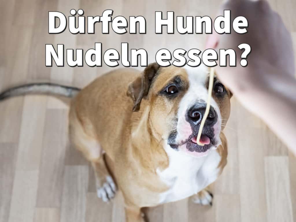 Dürfen Hunde Nudeln essen? Rohe oder gekochte Nudeln