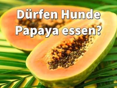 Dürfen Hunde Papaya essen: Kerne, Blätter, Fruchtfleisch, Pulver?