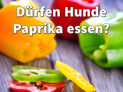 Dürfen Hunde Paprika essen: grüne, rote, gelbe Paprika?