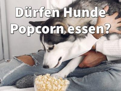 Dürfen Hunde Popcorn essen? Hunde Popcorn mit Leberwurst-Geschmack selber machen