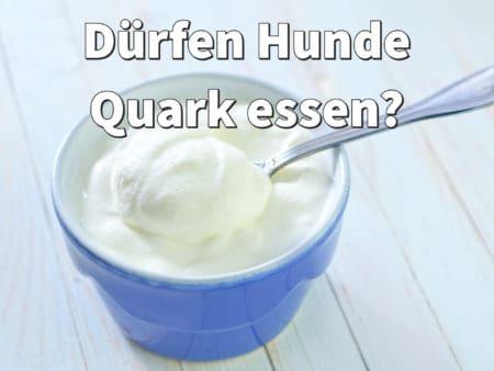 Dürfen Hunde Quark essen?