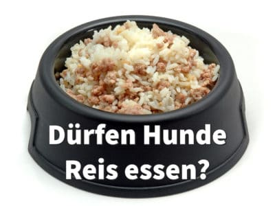 Dürfen Hunde Reis essen?