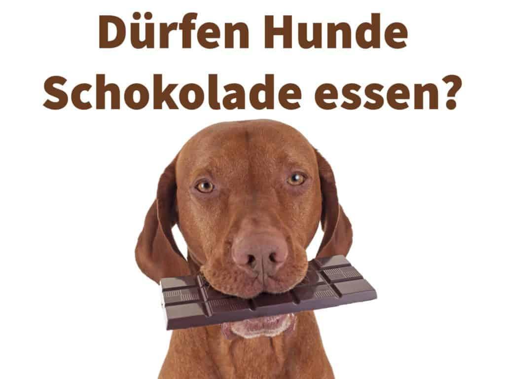 Dürfen Hunde Schokolade essen? Dunkle Schokolade ist giftig