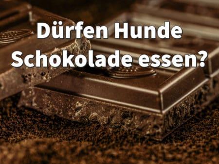 Dürfen Hunde Schokolade essen?