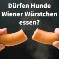 Dürfen Hunde Wiener Würstchen essen?