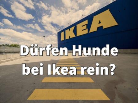 Dürfen Hunde bei Ikea rein? Oder müssen wir draußen bleiben ...