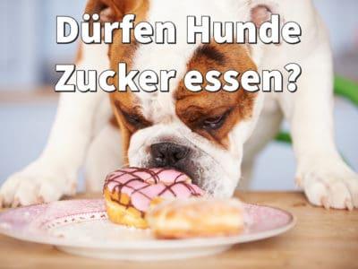 Dürfen Hunde Zucker essen? Schlecht für Zähne, ungesund fürs Gewicht